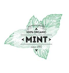 Mint leaves organic product 100 percent quality vector