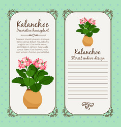 vintage label with potted flower kalanchoe vector image