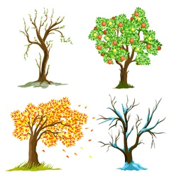 seasons of tree vector image vector image