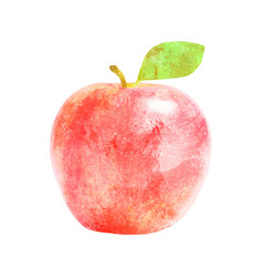 watercolor red apple fruit with leaf on white vector image vector image