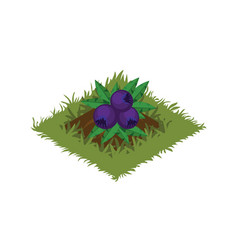 Isometric cartoon fruit garden bed with berry vector