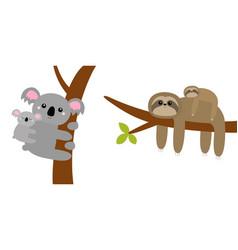 Koala bear sloth hanging on tree branch leaf cute vector