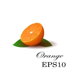 Orange on a white background vector image