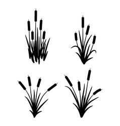 set typhaceae marsh herb vector image