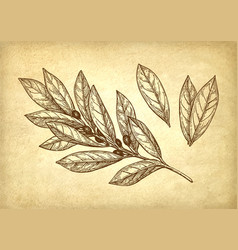 Bay leaves set vector