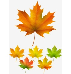 Collection autumn maple leaves vector