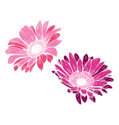 Cute pink daisies isolated on white background vector