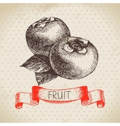 Hand drawn sketch fruit persimmon Eco food vector