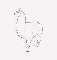 Lama icon line element of vector