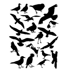 silhouette birds vector image