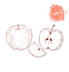 whole apple half and slice of apple on a white vector image
