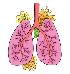 lungs doodle drawing of vector image vector image