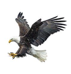 Bald eagle fly landing vector