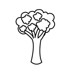 Silhouette vegetable broccoli icon vector