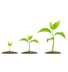 growing green sprout vector image
