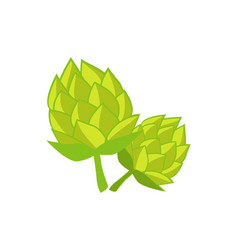 green humulus hop isolated vector image