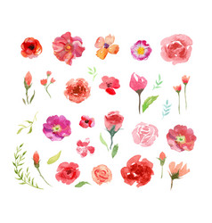 watercolor aquarelle roses and leaves vector image