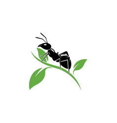 Ant logo template vector