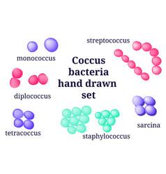 Arrangements of coccus bacterial microorganism vector