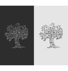 Olive tree on vintage paper vector image