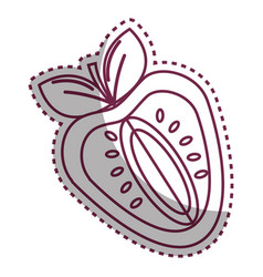 Sticker silhouette strawberry fruit icon stock vector