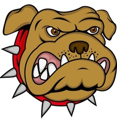 bulldog cartoon vector image vector image
