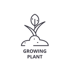 growing plant line icon outline sign linear vector image