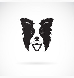 A border collie dog on white background pet vector