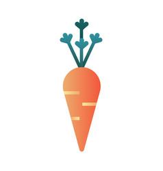 Carrot gradient vector