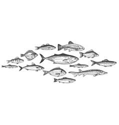 Fish school hand drawn fishes shoal underwater vector