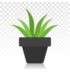 Green aloe vera with potted plant flat icon vector