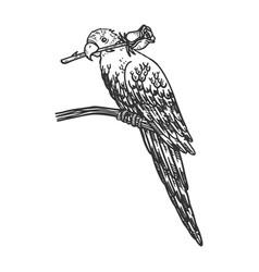 Parrot with rose in beak sketch vector