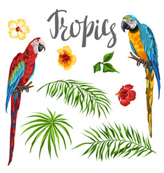 set of tropical plants and parrots vector image