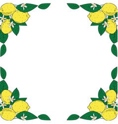 tropical citrus lemon fruits with flowers frame vector image