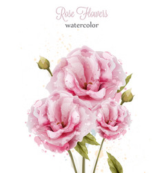 Watercolor pink wild roses isolated vector