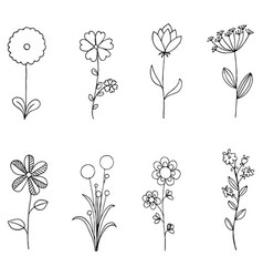 set of doodle flora wild and nature flowers on vector image vector image