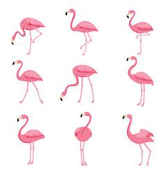 cartoon pink flamingo set cute flamingos vector image vector image
