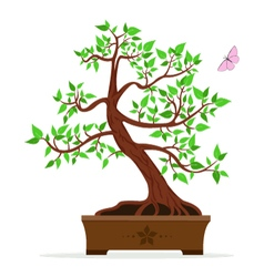 A bonsai tree vector
