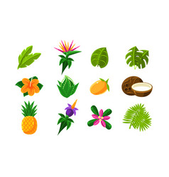 collection tropical summer exotic fruits vector image
