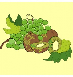 grapes and kiwi vector image