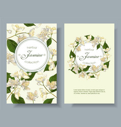 Jasmine flowers banner vector