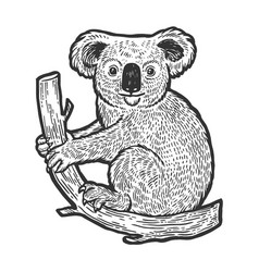 Koala bear on tree sketch engraving vector