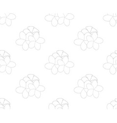 plumeria frangipani seamless on white background vector image