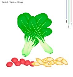 Pok Choi with Vitamin K and Vitamin A vector