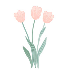 doodle pink tulip flowers isolated on a vector image