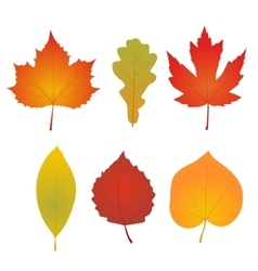 Isolated autumn leaves vector