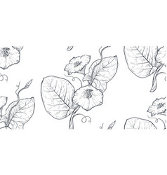 Seamless pattern with hand drawn bindweed vector