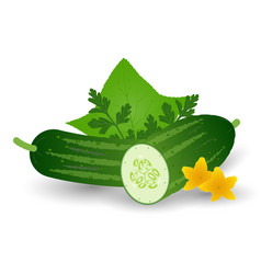 fresh cucumber vegetable with leaves flowers and vector image vector image