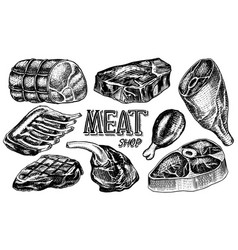 beef meat pork steak chicken leg meatloaf vector image