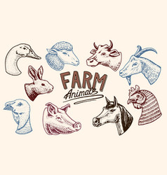 farm animals head a domestic horse pig goat vector image